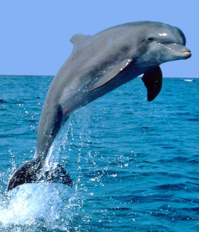 in love with a dolphin nicola amadora - Dolphin Pics
